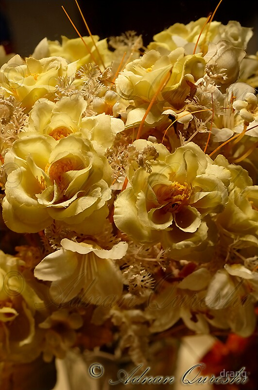 Yellow Roses by dranq