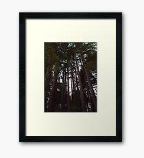 Tall Towering Redwoods Framed Print