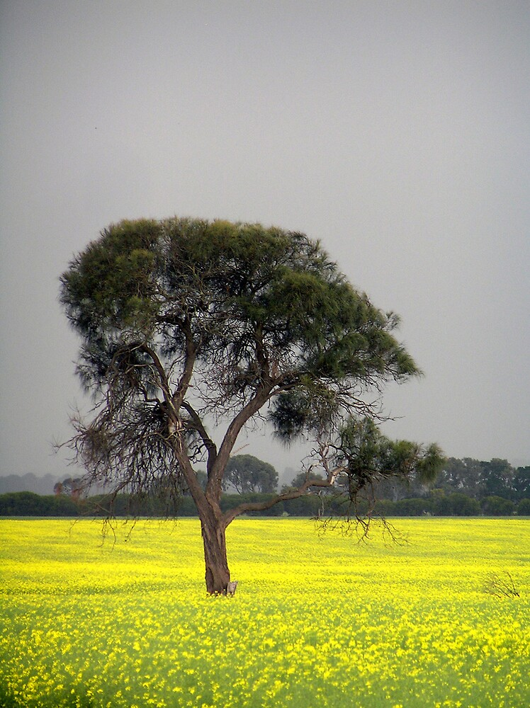 Tree in Yellow Field by QPhotography
