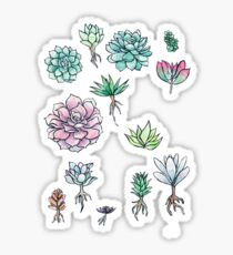 Succulent 13 package Sticker