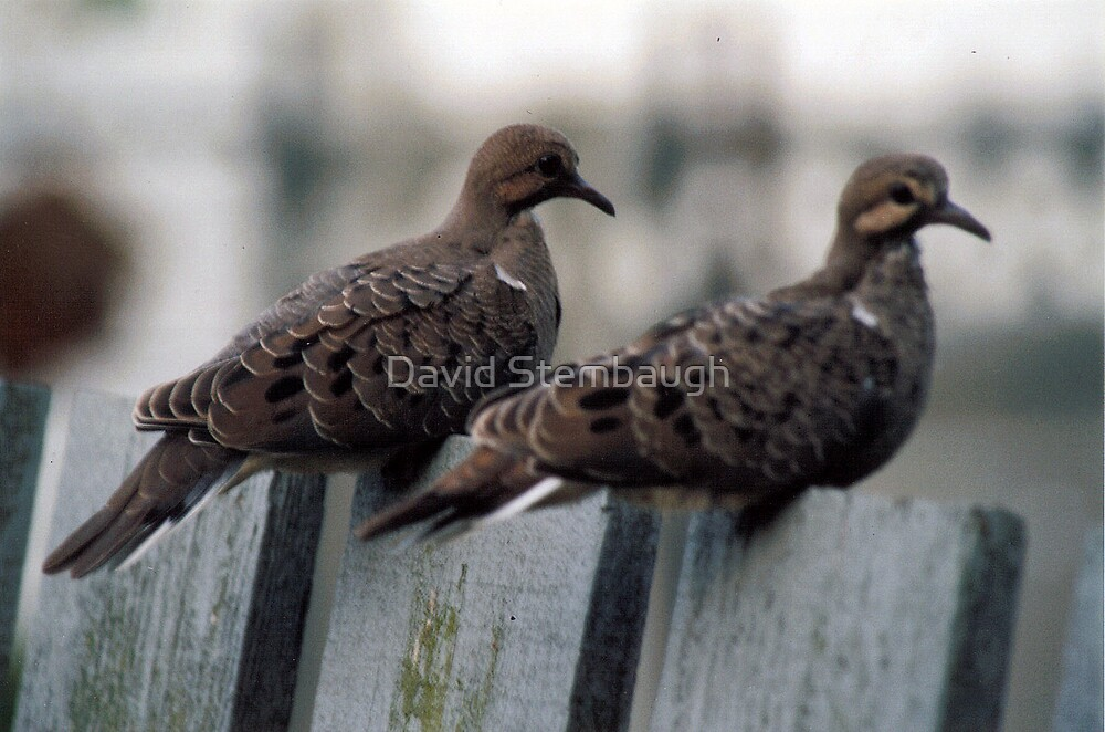 just sitting on the fence by David Stembaugh