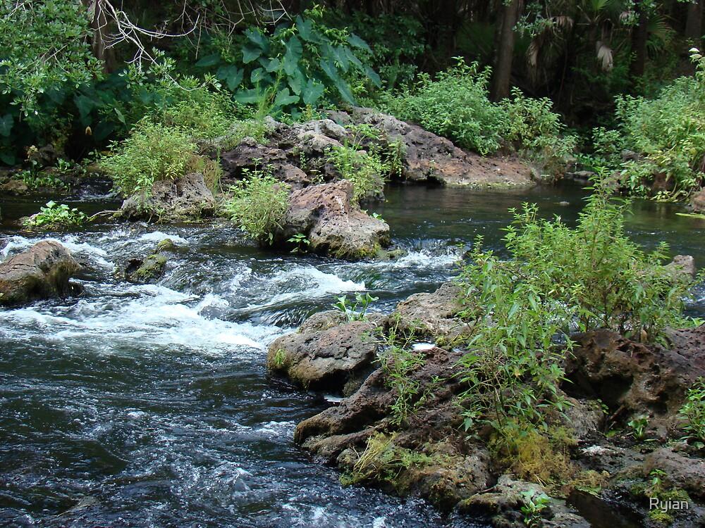 Hillsborough River, Florida by Ryian