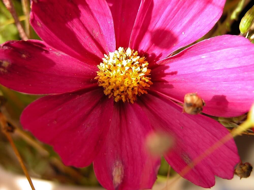 Flower by SunnyDay
