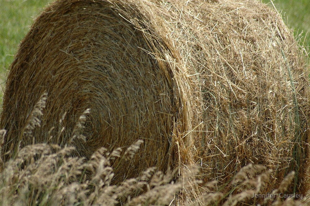 Hay by Jennifer  Causley