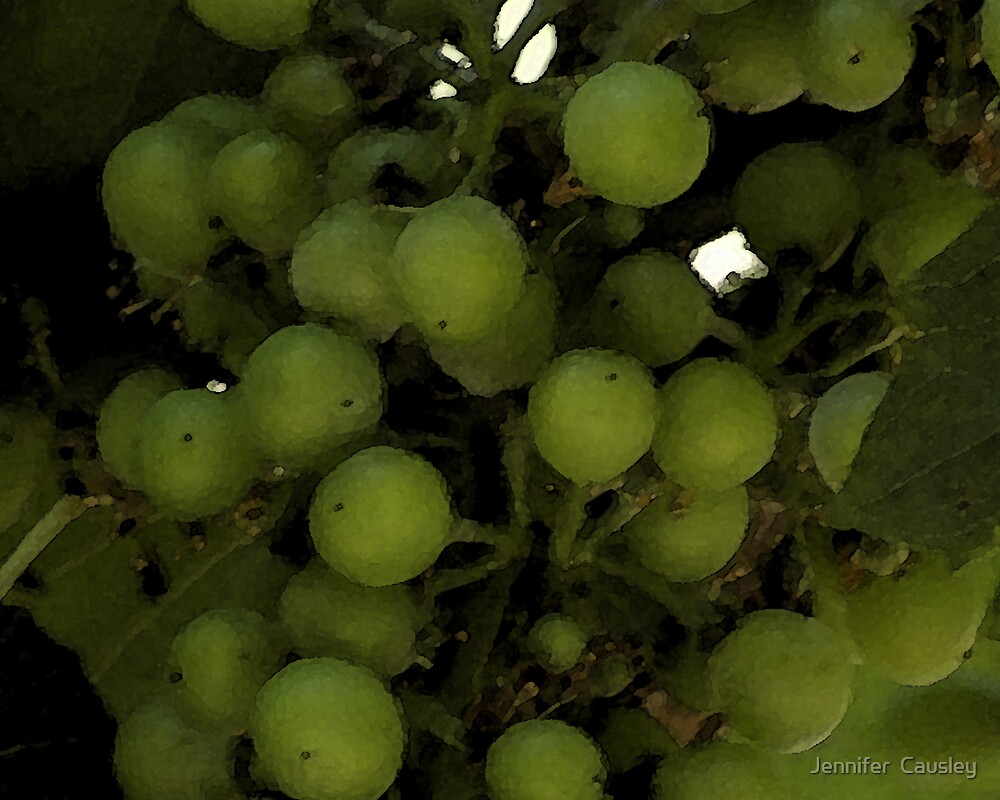 Grapes by Jennifer  Causley
