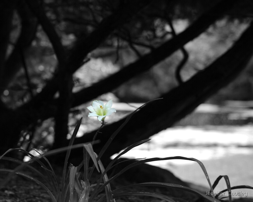 Lonely Flower by Jennifer  Causley