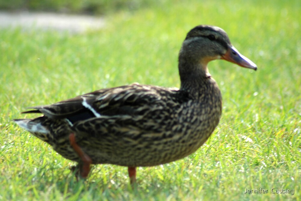 Walking Duck by Jennifer  Causley
