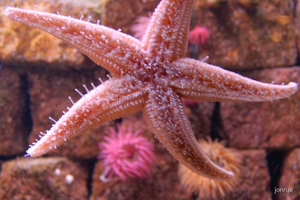 Starfish by jonrye