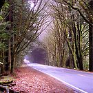 Driving Through Redwoods by SunnyDay