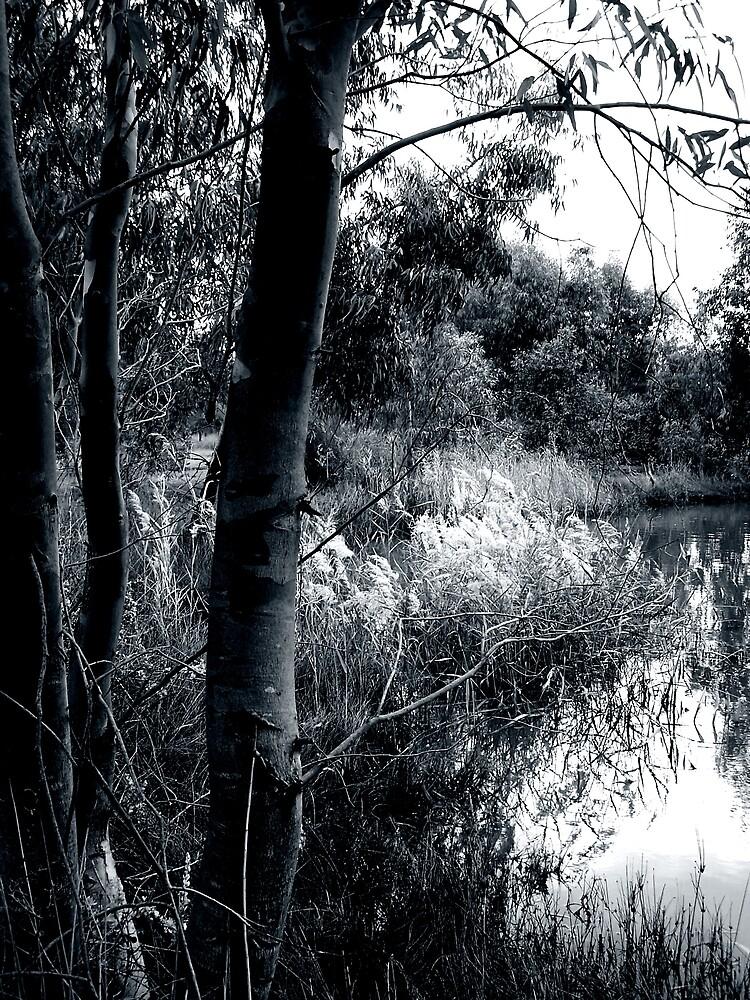 wetlands by Princessbren2006