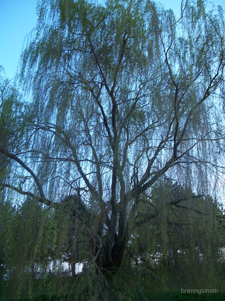 Weeping Willow by brennysmom
