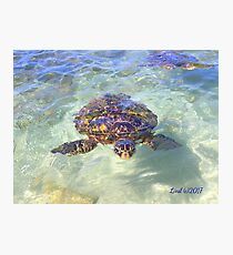 Honu Peek-a-boo Photographic Print
