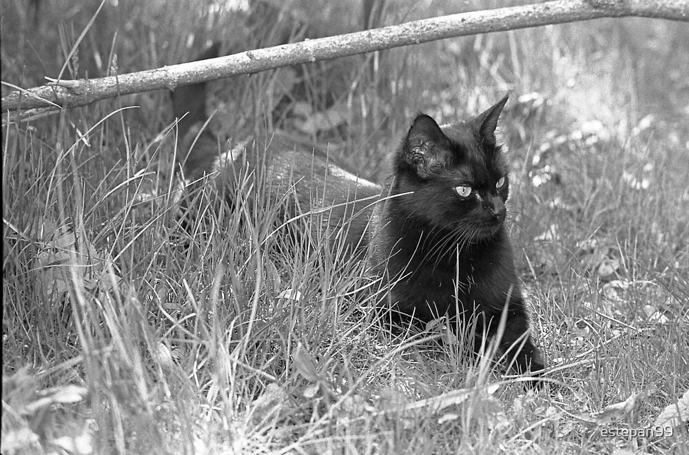 black cat by estepan99