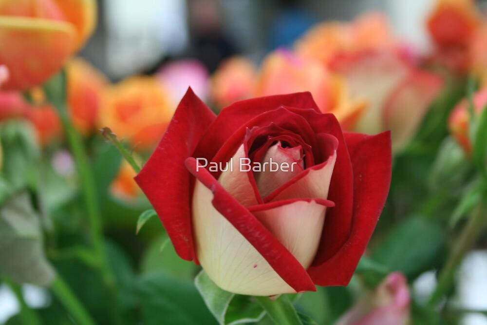 Rose by Paul Barber