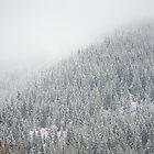 Winter Oregon Forest by Bradley Hebdon