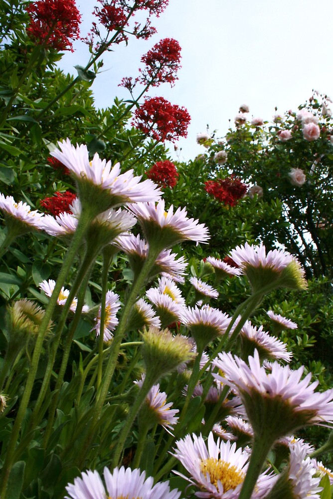 daisy by pelangihumaira