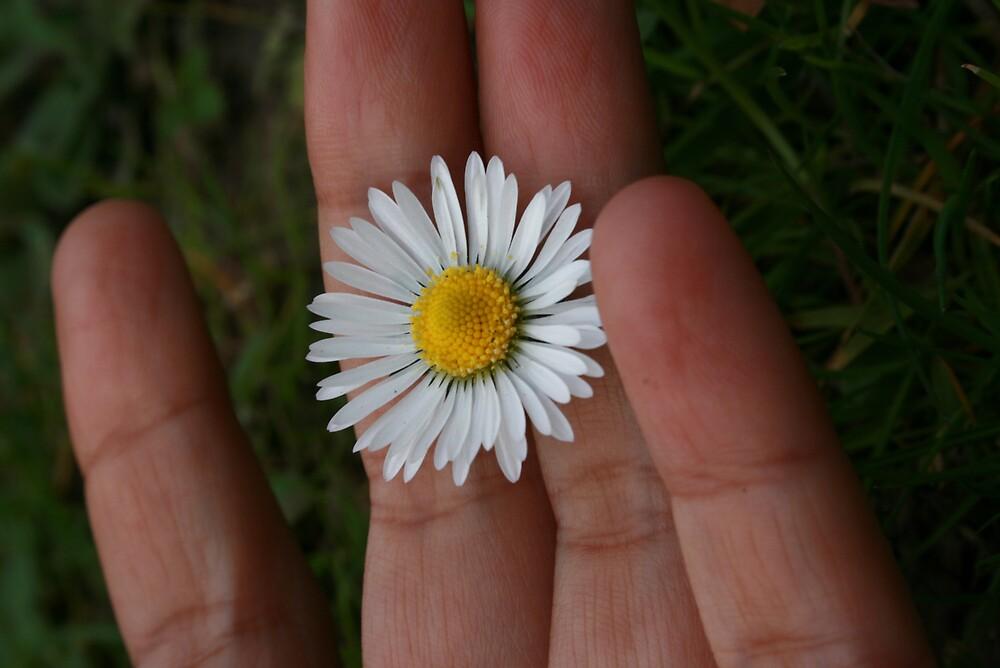 daisy spring by pelangihumaira