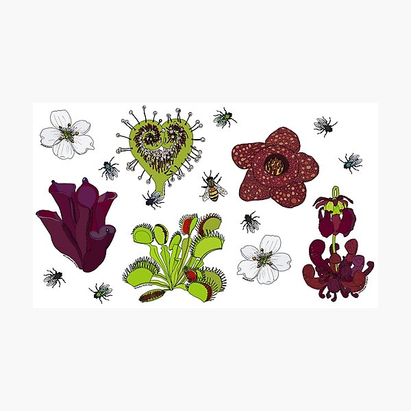 Insectivorous plants - scattered Photographic Print