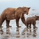 Synchronized Bear Watching by Owed To Nature
