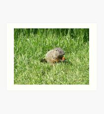 groundhog in the grass Art Print