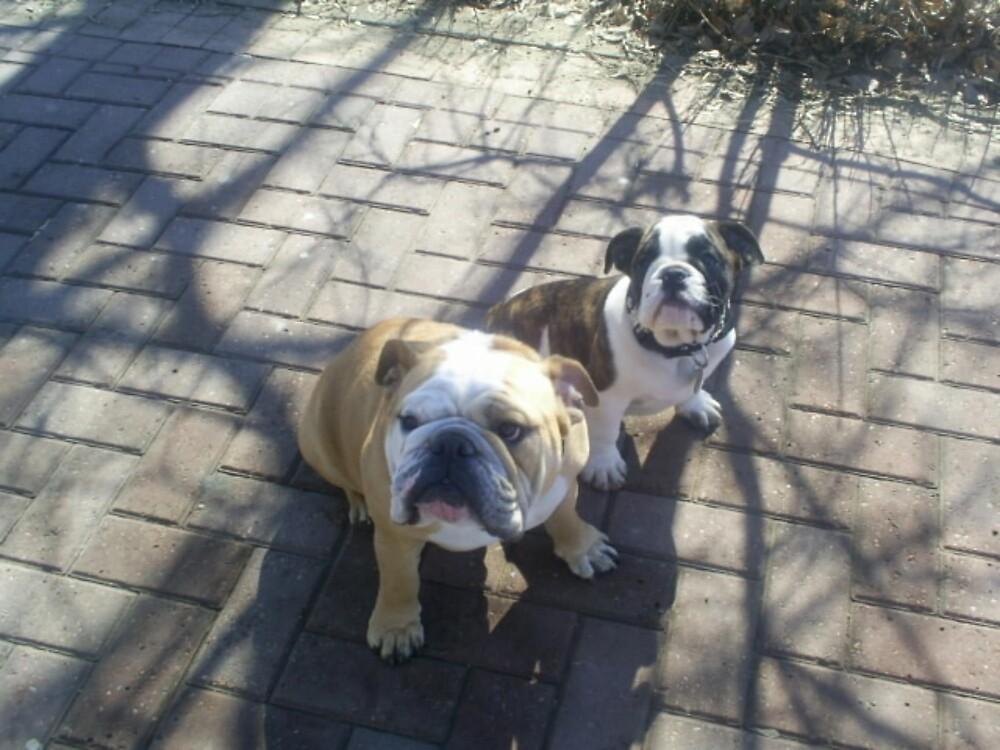 two bulldogs by oilersfan11