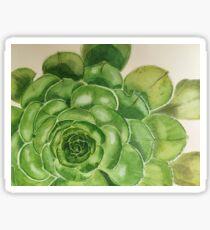 Detail of an Aeonium Succulent  Sticker