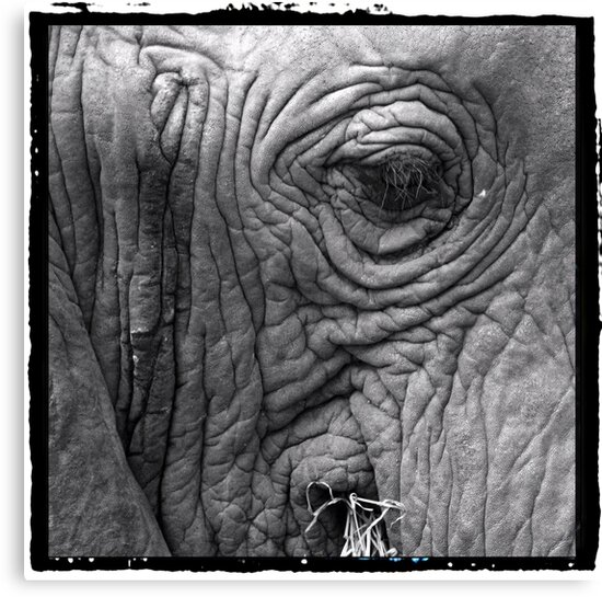 Gentle giant by Sharon Bishop
