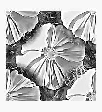 Big black and white flower Photographic Print