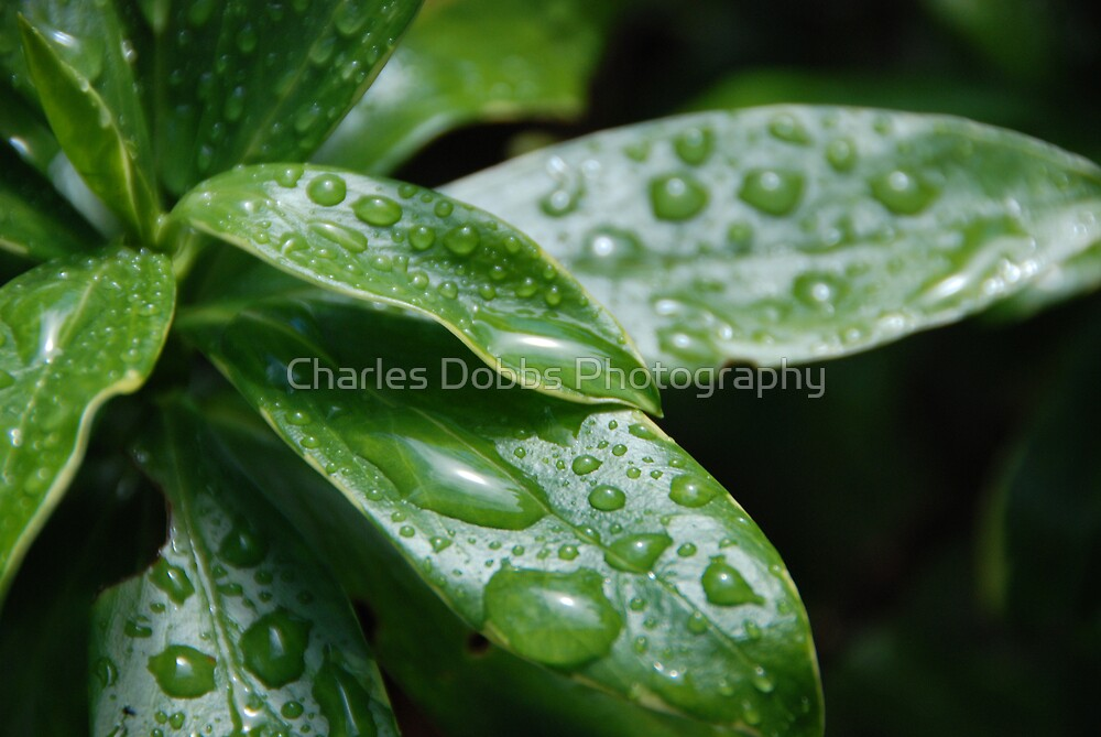 Drops of Life by Charles Dobbs Photography