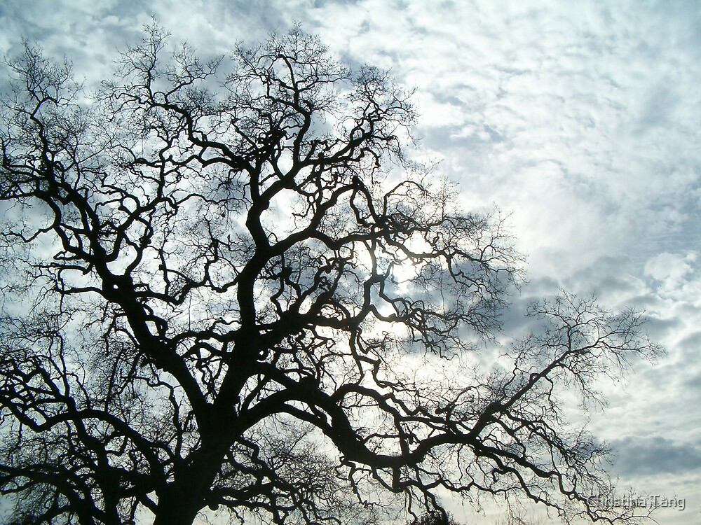 Tree Reaching for the Sky by Christina Tang