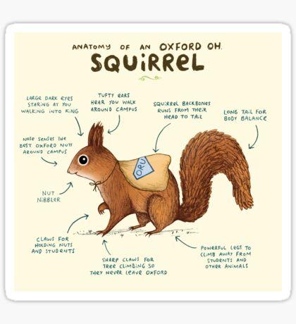 Anatomy of an Oxford OH Squirrel Sticker