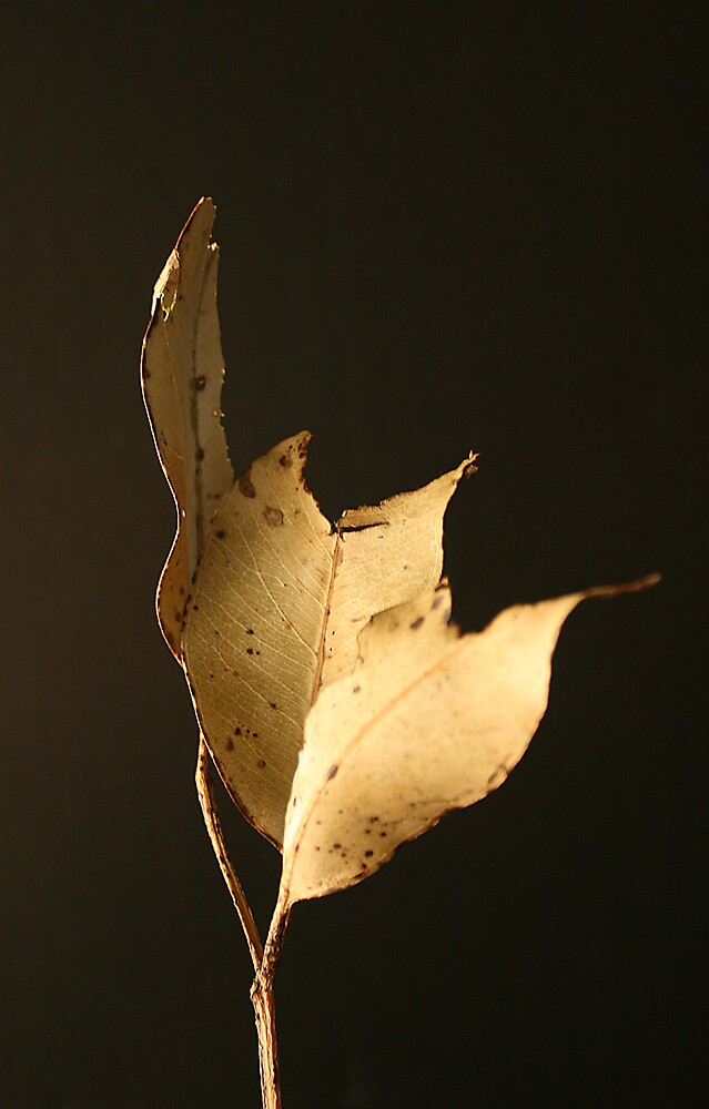 Dried Leaf by Chris Jenkins