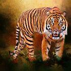 Sumatran Tiger  by Theresa Campbell