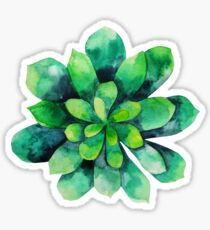 Green watercolor succulent Sticker