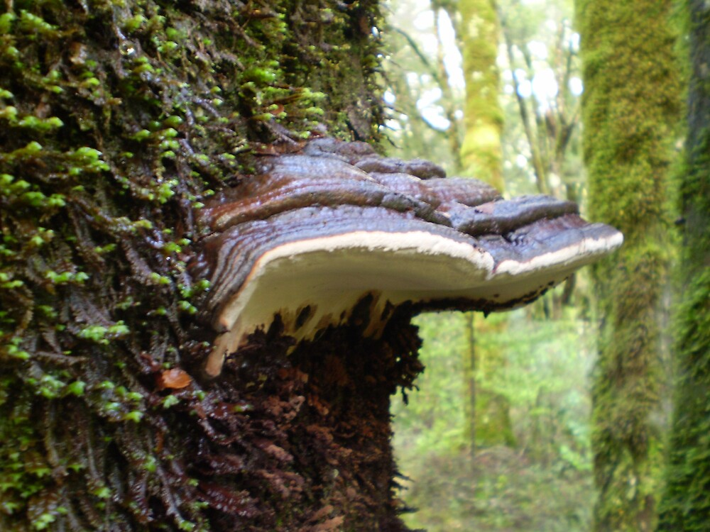 Bracket Fungus 2 by Hippo