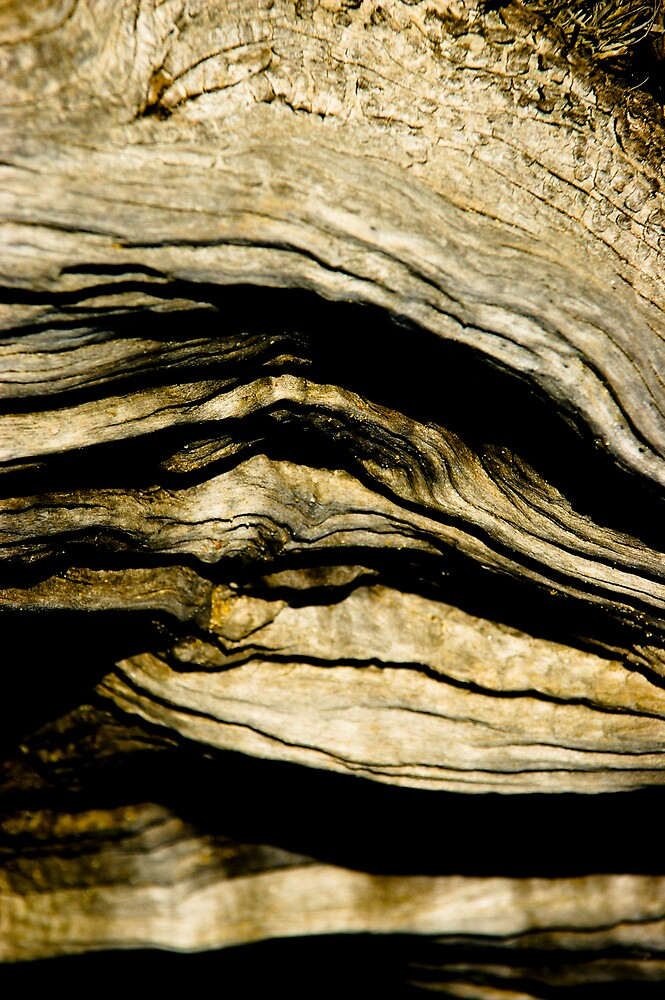 Old wood.. by Leigh  Parkin