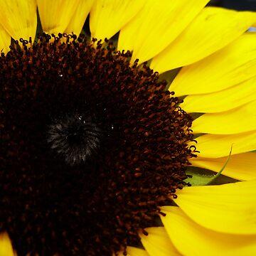 Sunflower by larathedog