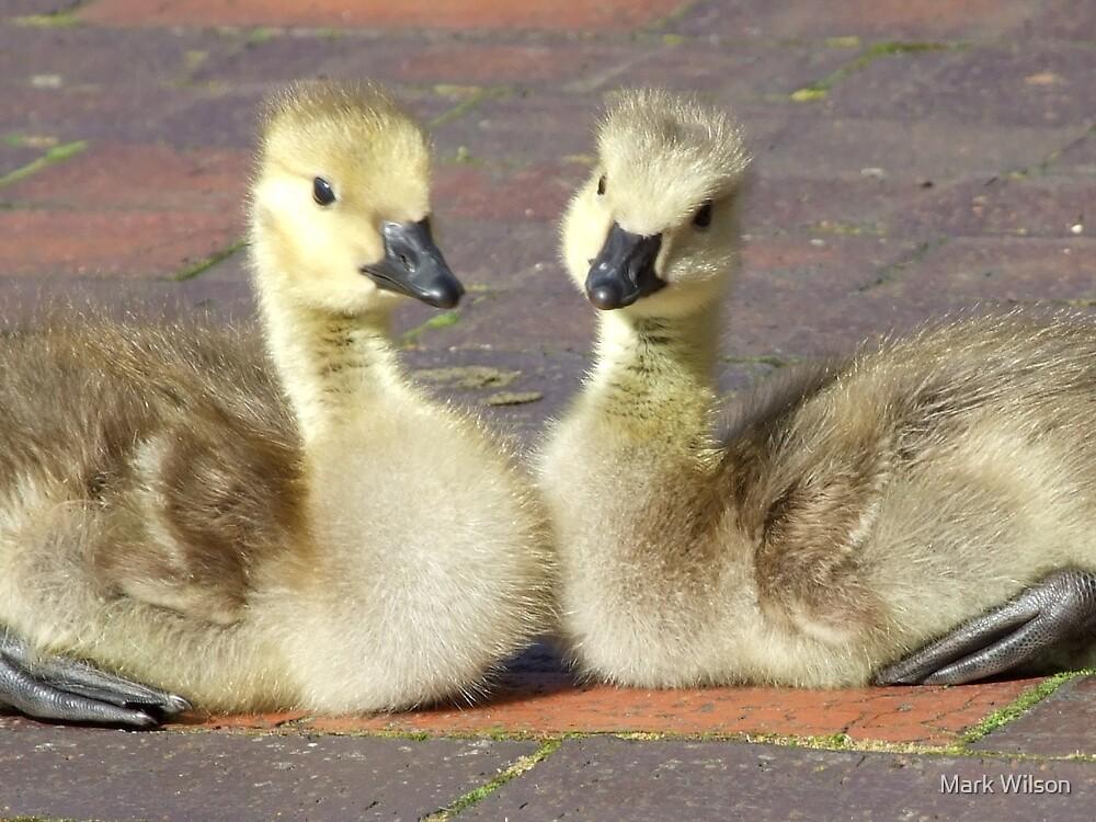 Gosling Siblings by Mark Wilson