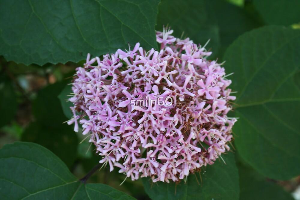 Purple flowers by smiln60