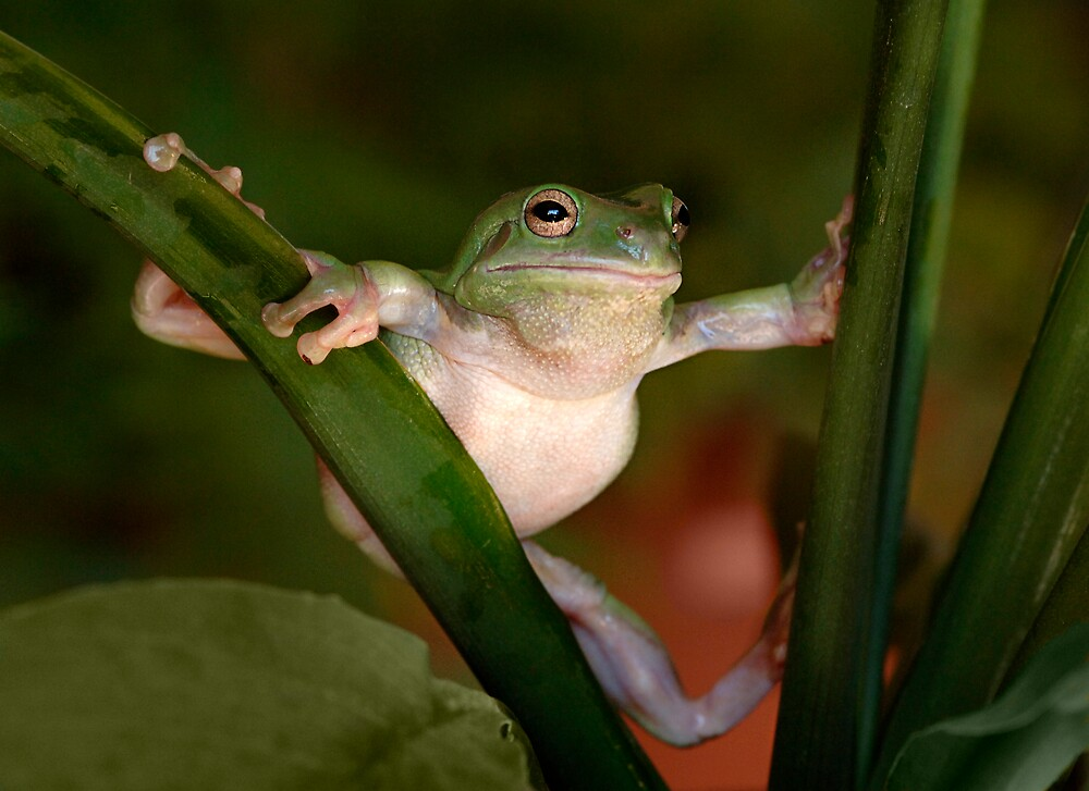 Green Tree Frog Gymnastics by inspiredimages