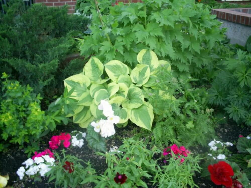 plants and flowers gardens by oilersfan11