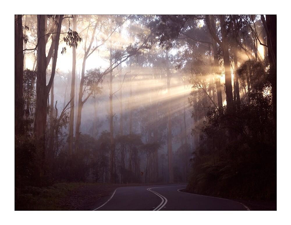 Morning Glory by Sue Wickham