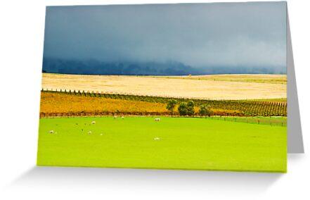 Autumn Storm by KathyT