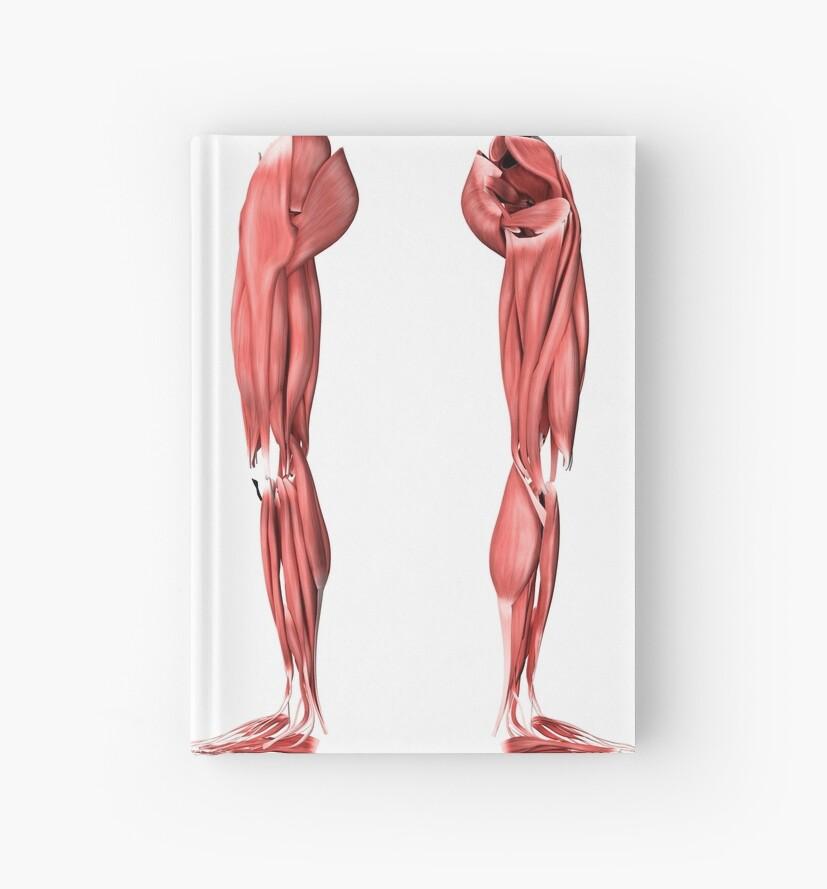 Cuadernos de tapa dura «Ilustración médica de los músculos de la ...