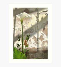 Arum Lilly 3 - Death & Life Art Print