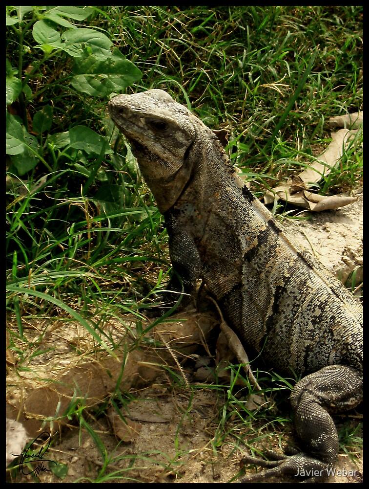 The Lizard King by Javier Webar