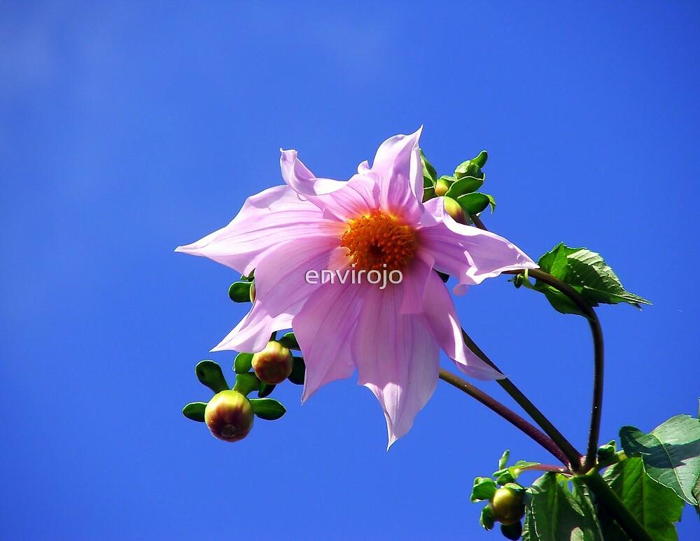 Blue Sky Cheer by envirojo