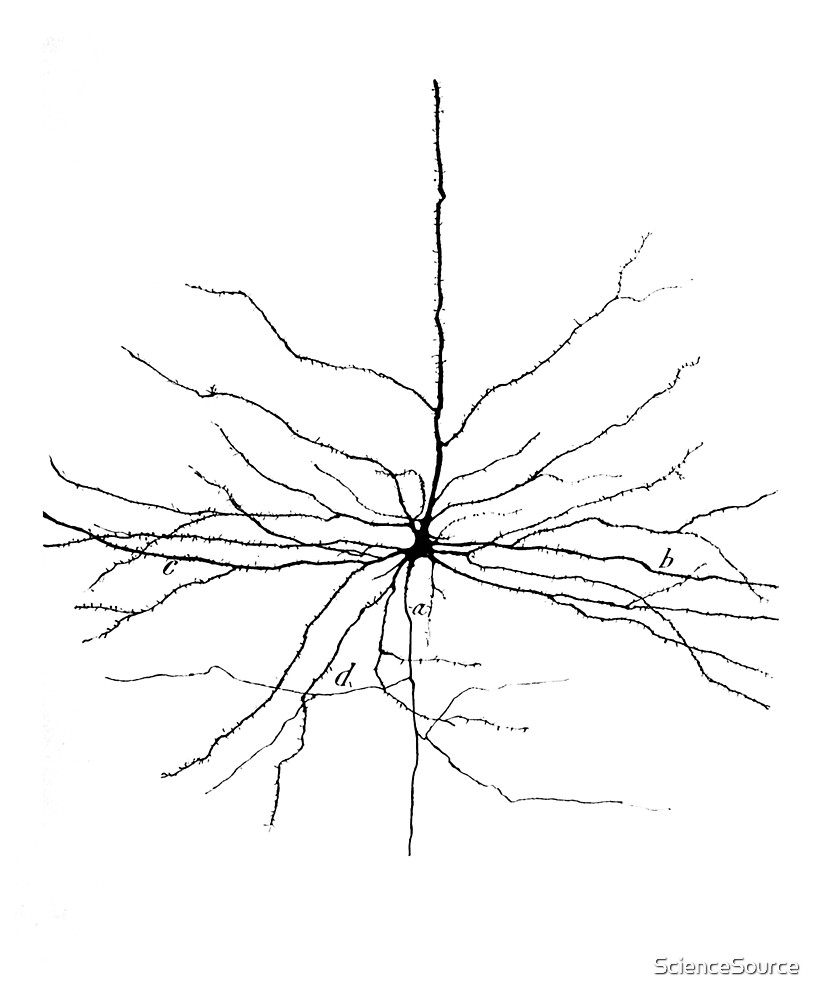Cajal Illustration, Pyramidal Cell by ScienceSource