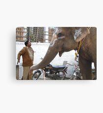 ..elepants.. Canvas Print