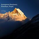 Annapurna Book 2 by Andy Newman